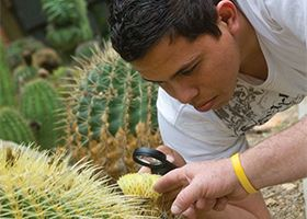 Man examines cactus plant with magnifying glass