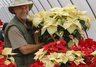 POINSETTIA WEBCAM